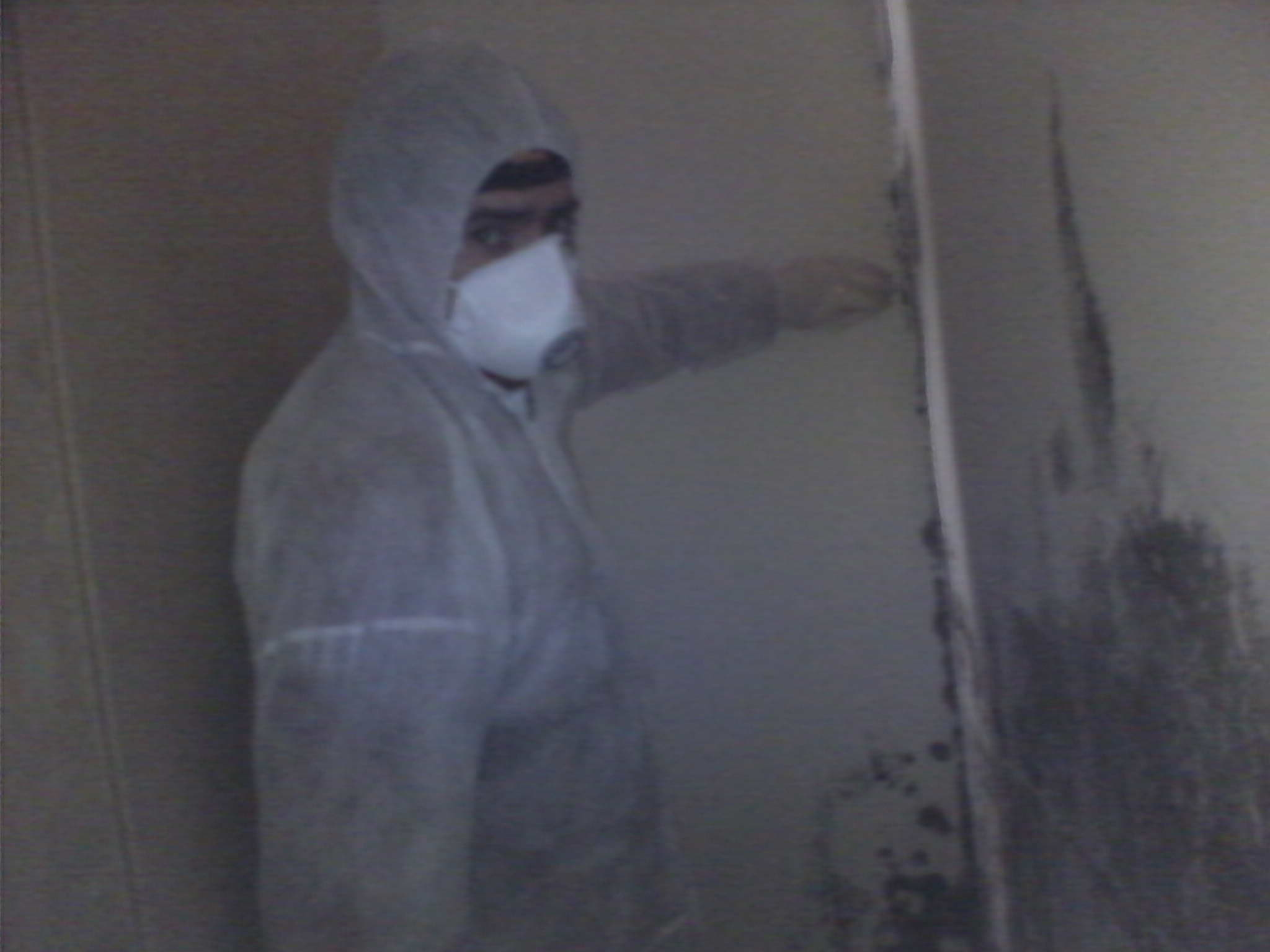 mould inspector