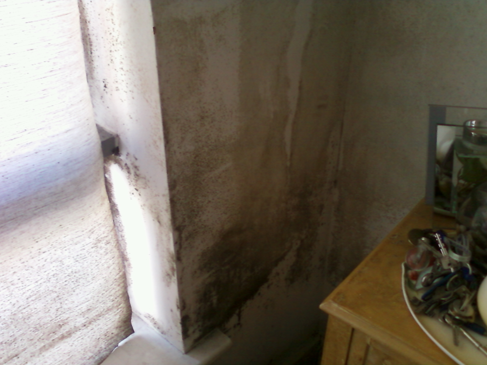 mould infected apartment in Dublin