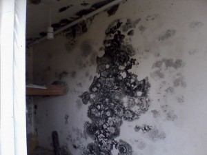 mould in irish home