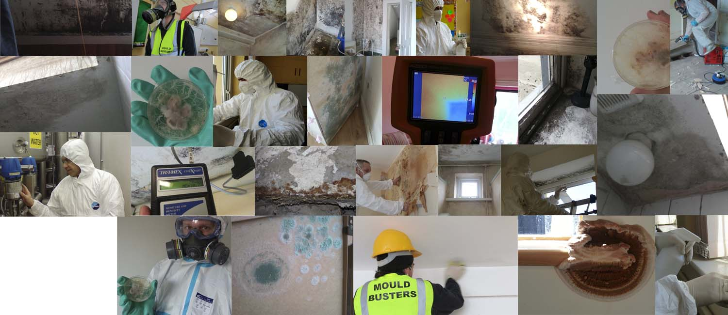 mould-busters-ireland-dublin