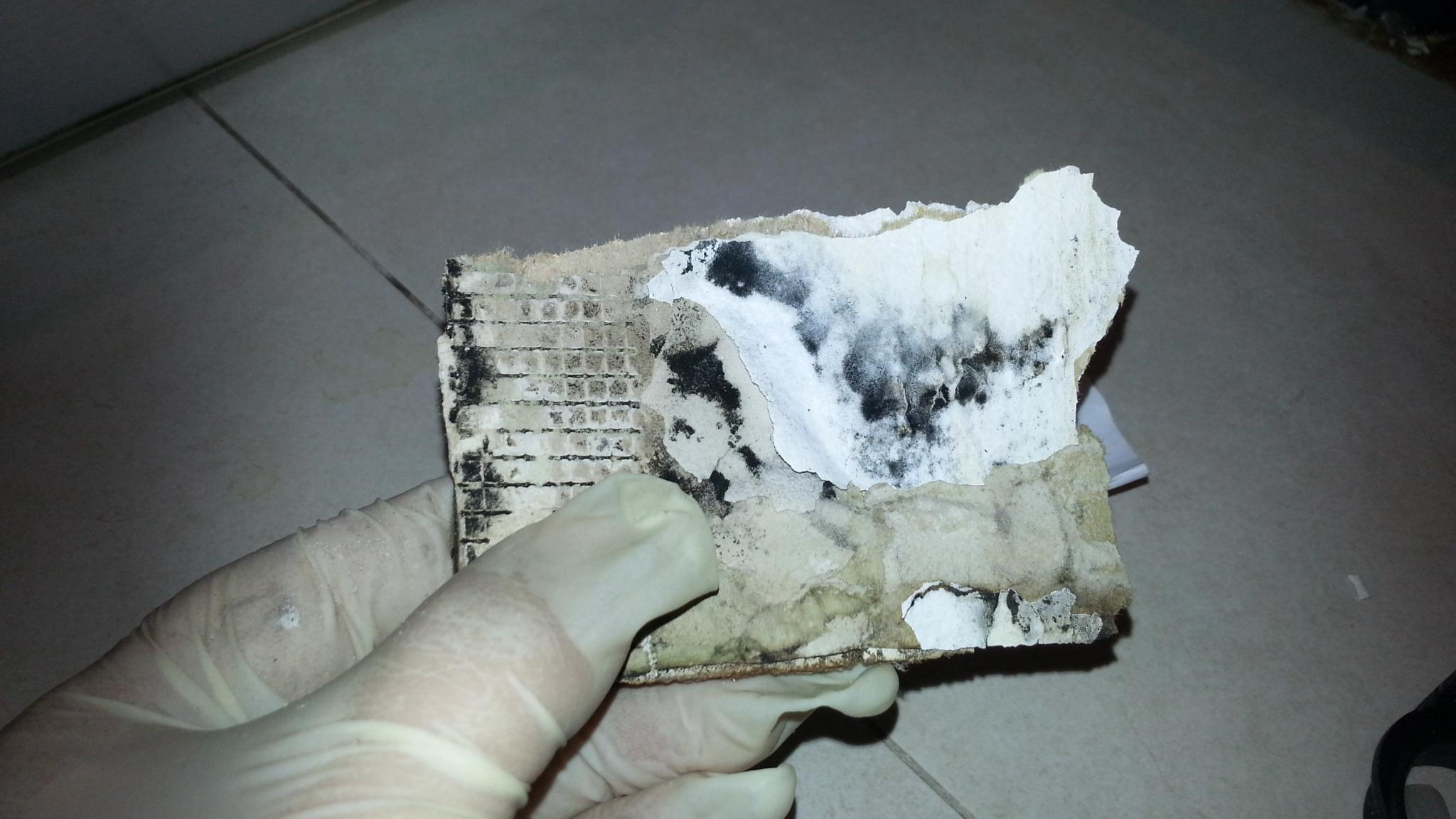 toxic-mould-testing-dublin