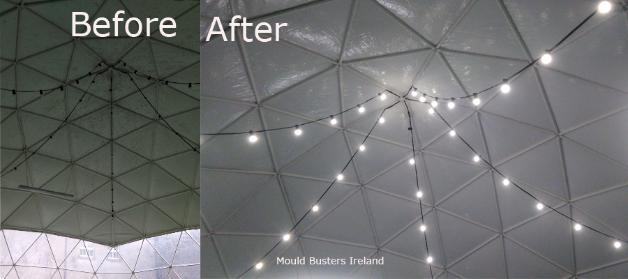 dome-clean-mould-project
