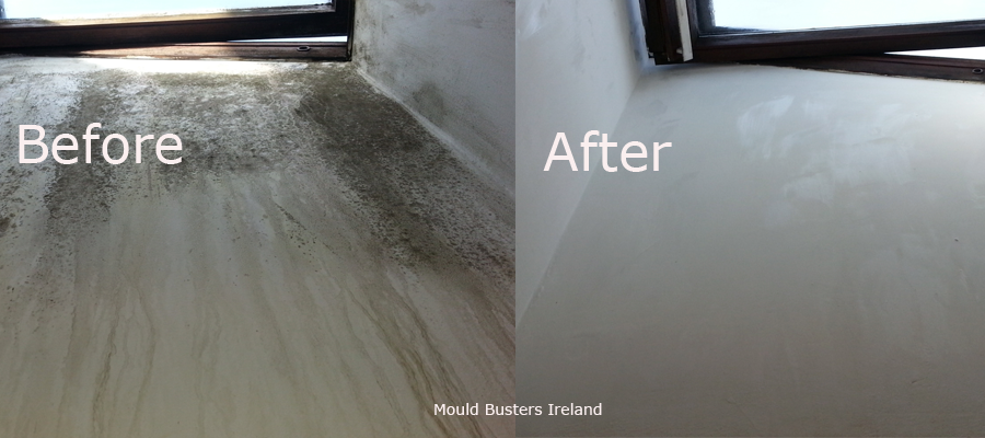 mould-busters-dublin